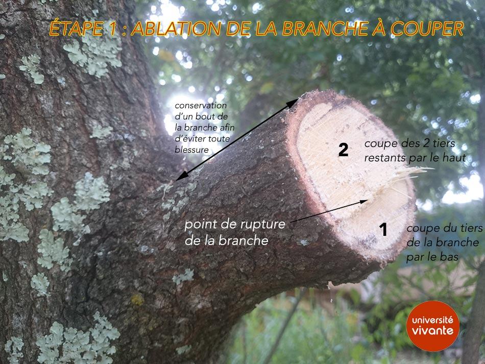 image BrancheWiki1.jpg (0.1MB)